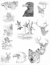 WILDLIFE PEN AND INK DESIGNS